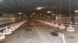 Nuovo piccolo sistema di innalzamento della pavimentazione del pollo