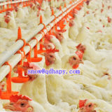 Sensor de temperatura personalizado para casa de aves com equipamento de conjunto completo
