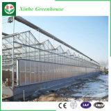 Serra agricola dello strato del PC del fornitore della Cina per le verdure