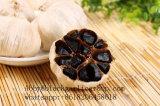 다중 정향나무 검정 마늘