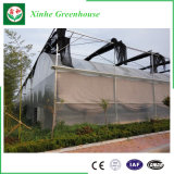 Estufa comercial agricultural do jardim da película plástica