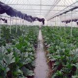 De beste Verkopende Plantaardige Serre Van uitstekende kwaliteit van de Plastic Film voor Landbouw