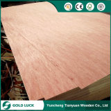Madera contrachapada de 15 de x 1200 x de 2400m m Bintangor/Okoume/Pine para los muebles