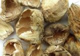 Polvere naturale dell'estratto di 100% Pericarpium Arecae