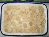 In Büchsen konservierter Austeren-Pilz P&S in der Salzlösung