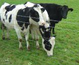 가축 담에서 사용되는 목초지 필드 담
