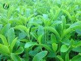 高品質のSteviaの葉のエキスの粉Rebaudioside 40%~ 98%