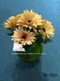 Gerbera artificiale/di plastica/di seta Bush (XF-FD03) del fiore