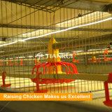Tianrui Entwurfs-Huhn-Halle-Haus-automatischer Geflügelfarm-Geräten-/Batterie-Huhn-Bratrost-Rahmen