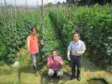 Bio fertilizante de Unigrow na plantação vegetal