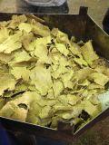 大豆油の出版物機械または茶種油の抽出機械熱い販売