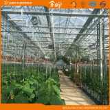 Agricultural PlantingのためのガラスGreenhouse