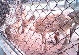 Tierkettenlink-Zaun mit niedriger Preis-Qualität