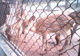 حيوانيّة [شين لينك] سياج مع [لوو بريس] [هيغقوليتي]