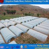 Estufa do túnel da película plástica para o tomate do fabricante/Invernadero de China