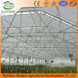 Binnen In de schaduw stellend Systeem van Landbouw en Commerciële Serre