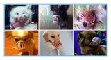 Produits de santé d'animal familier toilettant le museau de crabot d'animal familier de masque de couverture de bouche d'Anti-Dégagement d'outil