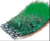 Geomat 뻗기 그물 500GSM 백색 녹색