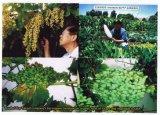 レモン、バナナおよび柑橘類の植わることのUnigrowの微生物有機肥料