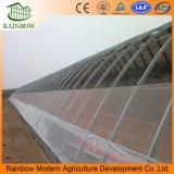 Эффективное использование солнечной энергии на базе гидропонное огородничество томатный парниковых