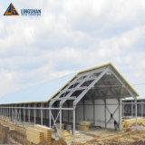 Estrutura de aço de alta qualidade Avícola House Galpão de frangos de carne de frango House para Kuwait