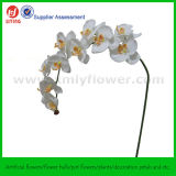 44  긴 Stem Artificial Silk Orchid Flowers (12flowers)