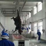 Dell'impianto bovino del macello della Buffalo della mucca del bestiame piccolo