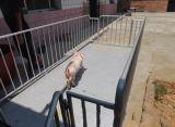 Барьер овец стали углерода/панель загородки овец сделанная в Китае