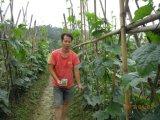 Bio- fertilizzante di Unigrow sulla piantatura di verdure
