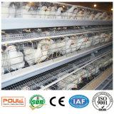 Sistema automático completo del equipo de la jaula del pollo de la capa