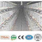 Cage de poulet à rôtir de couche de ferme avicole de technologie de Poul (galvanisation chaude)