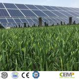 Sistema mai verde solare monocristallino di Sunsolar di garanzie del comitato 290W