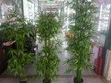 Migliori piante artificiali di vendita di bambù Gu1470107940025