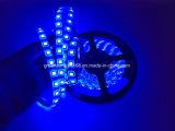 SMD 5050 LED Streifen mit anhaftendem Schutzträger