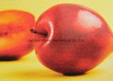 Film de laminage à froid 2 # D High Gloss Photo