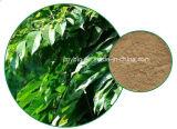 Estratto verde oliva del foglio dell'oleuropeina 20%-60% caldo di vendita