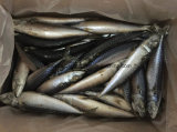De overzees Bevroren Gehele Vissen van de Makreel
