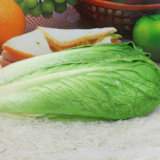 Modello di verdure artificiale verde dell'alimento dell'unità di elaborazione di alta qualità