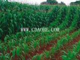 Kalium het van uitstekende kwaliteit van het Aminozuur 45% Organische Meststof