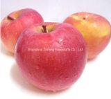 판매를 위한 좋은 품질을%s 가진 FUJI Apple