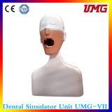 """"""" Simulazione medica usata per lo strumento d'istruzione dentale """""""