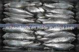 Траловый поймать Sardine для овощных консервов