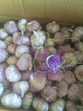 Il nuovo raccolto/aglio bianco normale/aglio bianco puro/aglio fresco