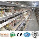Nous contacter pour construire des fermes de poulet de cage de batterie de couche