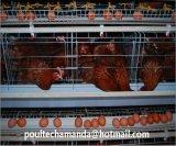 가금 농장 층 닭은 감금한다 나이지리아와 케냐 (유형 프레임)를 위한 자동적인 장비를 가진 시스템을