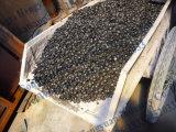 Fornalha da carbonização do carvão vegetal de madeira do escudo do coco