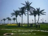 Искусственная пальма кокоса пальмы даты