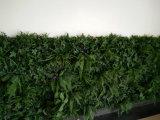 La nueva hierba de la pared del estilo planta el panel de cubierta