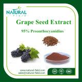 La fabbrica fornisce l'estratto puro della pianta della polvere di Procyanidine 95% dell'estratto del seme dell'uva di 100%