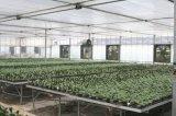 Het Landbouwbedrijf van het gevogelte wierp de Ventilator van de Industrie van de Ventilator van de Uitlaat van de Serre van de Ventilator van de Ventilatie af